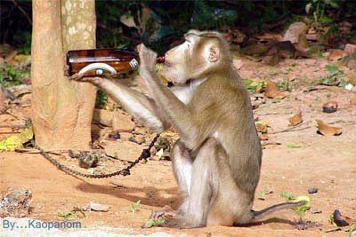 แม่ง ข่าวใหญ่ !! ลิงในสวนสัตว์คลั่ง! จับช้างกิน  ดูตามรูป