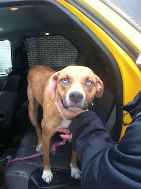 DOG FOUND:If anyone lost a tan-colored dog, light blue eyes, purple collar, please contact Jennifer Sagan (724) 980-9341...